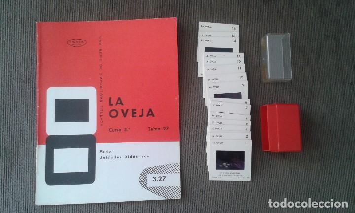 LA OVEJA - 16 DIAPOSITIVAS Y LIBRETO - CON ILUSTRACIONES DE ÉPOCA - 1967 - VER FOTOS (Fotografía Antigua - Diapositivas)