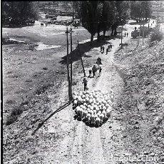 Fotografía antigua: NEGATIVO ESPAÑA CÁCERES PLASENCIA FERIA GANADO 1970 KODAK 55MM GRAN FORMATO NEGATIVE SPAIN PHOTO. Lote 76081975