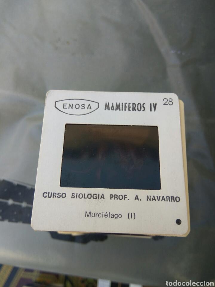 Fotografía antigua: DIAPOSITIVAS BIOLOGIA MAMIFEROS REPTILES AVES LOTE DE 650 APROX VER FOTOS Y DESCRPCION - Foto 3 - 101188142