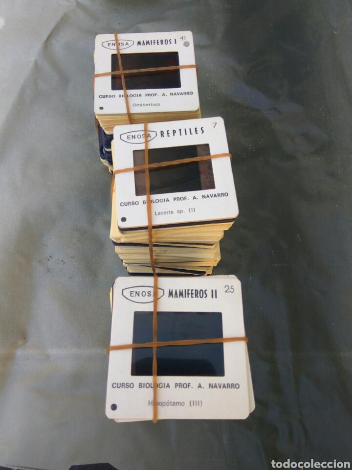 Fotografía antigua: DIAPOSITIVAS BIOLOGIA MAMIFEROS REPTILES AVES LOTE DE 650 APROX VER FOTOS Y DESCRPCION - Foto 4 - 101188142