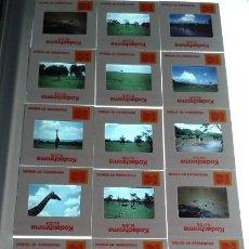 Fotografía antigua: COLECCION DE 36 DIAPOSITIVAS DE KENYA,MASAI,MARA RESERVA EN 1981 LOTE 16. Lote 109335243
