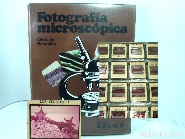 IMPRESIONANTES 220X FOTOGRAFIA MICROSCOPICA DIAPOSITIVAS- CIENCIAS NATURALES SALMA 1977- DIAPOSITIVA (Fotografía Antigua - Diapositivas)