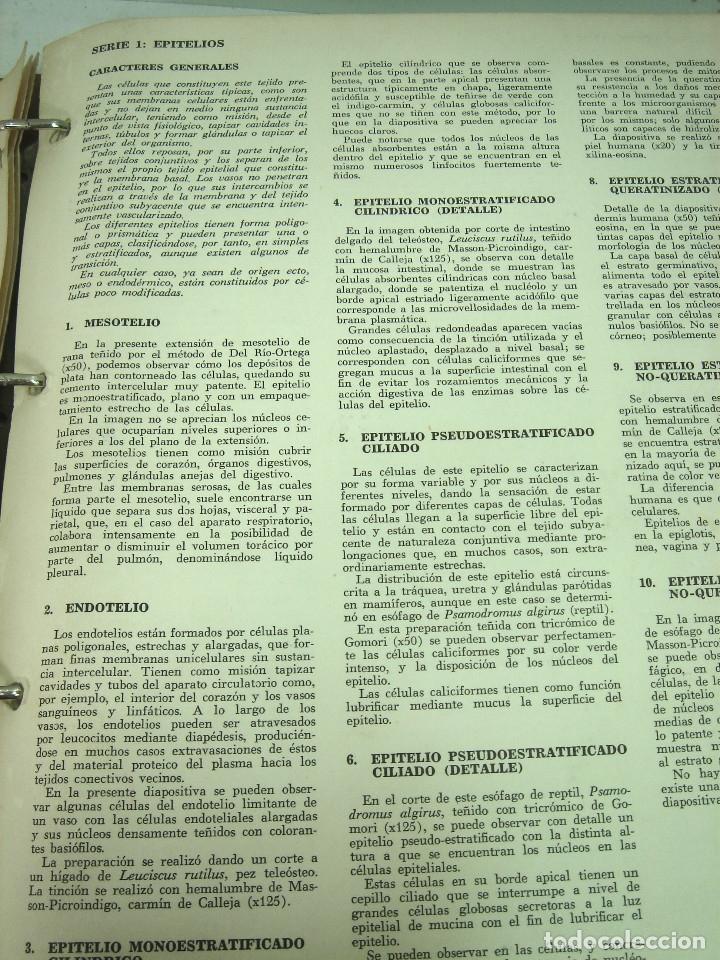 Fotografía antigua: IMPRESIONANTES 220x FOTOGRAFIA MICROSCOPICA DIAPOSITIVAS- CIENCIAS NATURALES SALMA 1977- DIAPOSITIVA - Foto 4 - 127802635