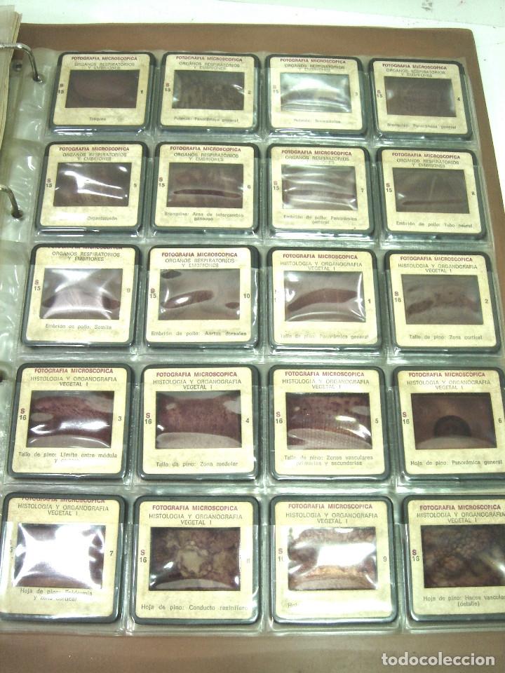 Fotografía antigua: IMPRESIONANTES 220x FOTOGRAFIA MICROSCOPICA DIAPOSITIVAS- CIENCIAS NATURALES SALMA 1977- DIAPOSITIVA - Foto 8 - 127802635
