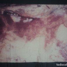 Fotografía antigua: 5 ANTIGUAS DIAPOSITIVAS CUEVAS DE ALTAMIRA. Lote 178687361