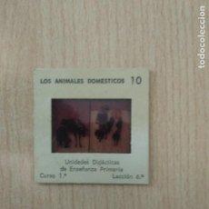 Fotografía antigua: DIAPOSITIVA ENOSA LOS ANIMALES DOMESTICOS, 10. Lote 293719823