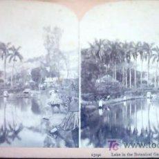 Fotografía antigua: 15190 LAKE IN THE BOTANICAL GARDENS, HABANA. Lote 27136656
