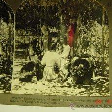 Fotografía antigua: 9770 MALAGA PRECIOSA COSTUMBRISTA EMPAQUETANDO LAS MALAGAS FOTOGRAFIA ESTEREOSCOPICA AÑOS 1900 C&C. Lote 26777385