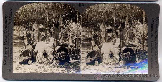 FOTOGRAFÍA ESTEREOSCÓPICA DE MÁLAGA: MANIPULACIÓN DE LAS UVAS (Fotografía Antigua - Estereoscópicas)