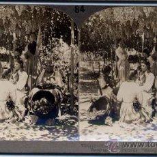 Fotografía antigua: FOTOGRAFÍA ESTEREOSCÓPICA DE MÁLAGA: MANIPULACIÓN DE LAS UVAS. Lote 16920092