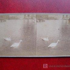 Old photograph - BARCELONA - LAGO DEL PARQUE - 17608572