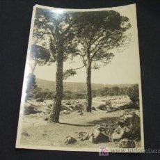 Fotografía antigua: PINARES - GREDOS - 1.944 - . Lote 19103273