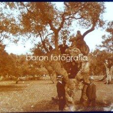 Fotografía antigua: MALLORCA, OLIVOS CAMINO DE RAXA, 1915. FOTO: SALVANY - NONELL. CRISTAL POSITIVO ESTEREO 6X13 CM.. Lote 29191634
