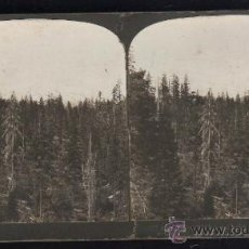 Fotografía antigua: FOTOGRAFIA. H.C. WHITE CO. 617 MT.SHASTA (14440 FT.) AS SEEN FROM TRAIN APPROACHING FROM SOUTH, USA. Lote 32326422