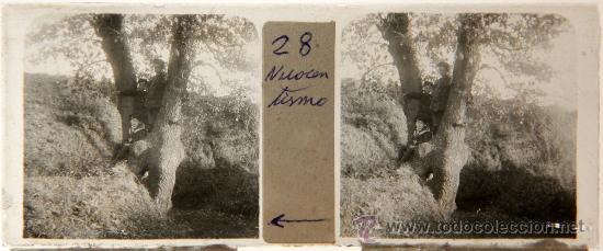 NUMULITE C0052 CRISTAL ESTEREOSCÓPICO NIÑO NIÑOS MARINERO ÁRBOL PAISAJE BOSQUE IMAGEN ANIMADA (Fotografía Antigua - Estereoscópicas)