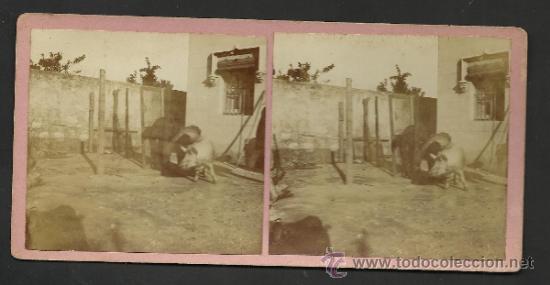 Fotografía antigua: LOTE 4 FOTOS ESTEREOS DE SAN BOY MATANSA DEL PORCH- VER FOTOS ADIC. MED.8X17 CM. - (F-345) - Foto 2 - 36617042