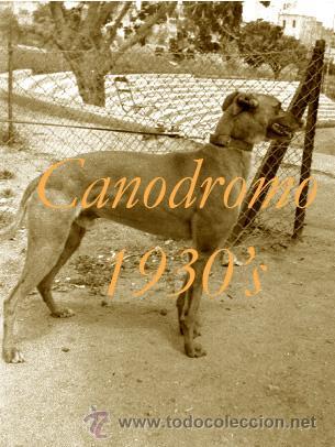 Fotografía antigua: CANODROMO - LES CORTS - BARCELONA - 1930S - 4 NEGATIVOS - Foto 3 - 38874934