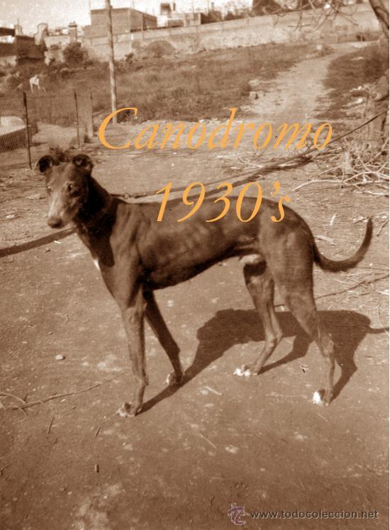 Fotografía antigua: CANODROMO - LES CORTS - BARCELONA - 1930S - 4 NEGATIVOS - Foto 4 - 38874934
