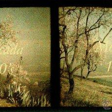 Fotografía antigua: AUTOCROMO - MONTCADA I REIXAC - 1920'S. Lote 42024939