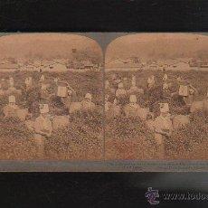 Fotografía antigua: FOTOGRAFIA ESTEREOSCOPICA. 76. MUJERES EN PLANTACION. JAPON.. Lote 43175980