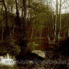Fotografía antigua: CATALUÑA. GERONA. PAISAJE HÚMEDO DE UN BOSQUE DE RIBERA. C. 1925. Lote 50659637