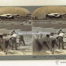 Fotografía antigua: COSTA RICA. TRABAJADORES DE EL CAFE DE COSTA RICA HACIENDO PILAS. 1902.. Lote 51977178