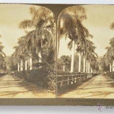Fotografía antigua: FOTOGRAFÍA ESTEREOSCÓPICA *ALAMEDA DE PALMERAS EN HONOLULÚ, HAWAI*, COPYRIGHT 1901 H.C. WHITE CO. Lote 52969518