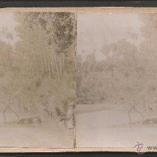 Fotografía antigua: PIERA - FOTO ESTEREOSCOPICA - MIDE 8,5 X 17,5 CM - (V-4743). Lote 55080350