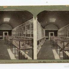 Fotografía antigua: FOTOMECÁNICA. INTERIOR DE MUSEO, POMPEYA. METROPOLITAN SERIES.. Lote 61346031