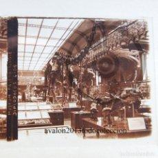 Fotografía antigua: MUSEO PALEONTOLÓGICO - DIPLODOCUS - CRISTAL ESTEREOSCÓPICO - FOTOGRAFÍA ÚNICA - AÑOS 10/20. Lote 98384875