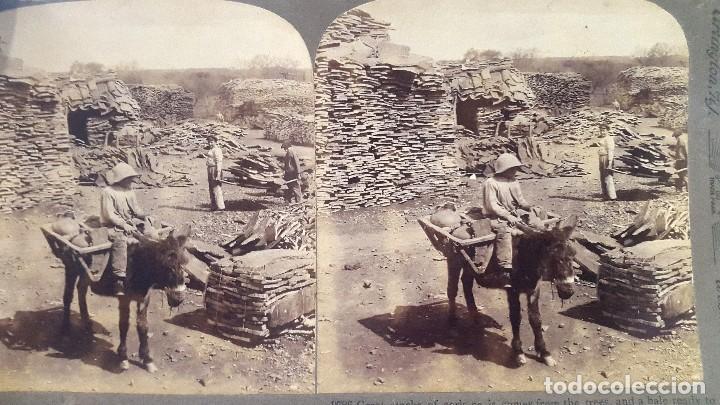 ALMORAIMA - CÁDIZ - CORCHERA - 1907 (Fotografía Antigua - Estereoscópicas)