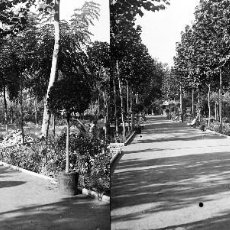 Fotografía antigua: VALENCIA - VIVEROS - NEGATIVO EN CRISTAL ESTEREOSCOPICO - AÑOS 1910-20. Lote 130312590