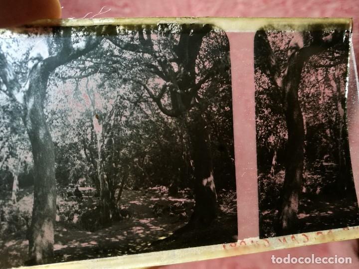 Fotografía antigua: lote 6 placas estereoscopicas de cristal .vidrio..tiana conreria---BARCELONA - Foto 6 - 147197194