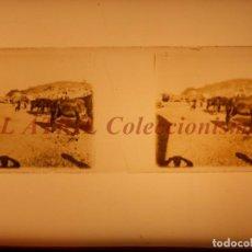 Fotografía antigua: BURJASOT, VALENCIA Ó CUEVA SANTA - POSITIVO EN CRISTAL ESTEREOSCOPICO - AÑOS 1920. Lote 153691202
