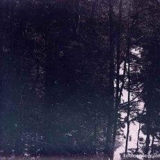 Fotografía antigua: BOSQUE. ÁRBOLES. C.1925. Lote 169765424