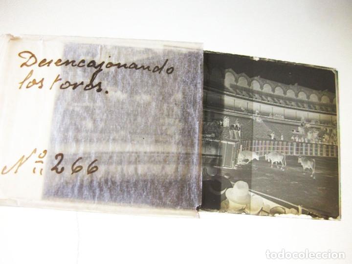 Fotografía antigua: Lote de Placas estereoscópicas. Toros en Bilbao. Principios del siglo XX. Toro fogeado. M. Riaza. - Foto 12 - 176290105