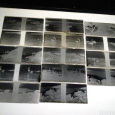 Fotografia antica: LOTE 14 PLACAS ESTEREOSCOPICAS DE CRISTAL EN NEGATIVO. COSTA DE GERONA 1933.. Lote 185732567