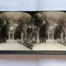 Fotografía antigua: FOTOGRAFIA ESTEREOSCOPICA, JARDINES BOTANICOS, RIO DE JANEIRO - BRASIL, AÑO 1903, RARA. Lote 206921168
