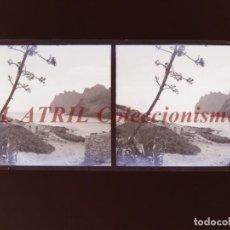 Fotografía antigua: PALMA DE MALLORCA - VISTA ESTEREOSCOPICA CRISTAL NEGATIVO - AÑOS 1930-40. Lote 213612890