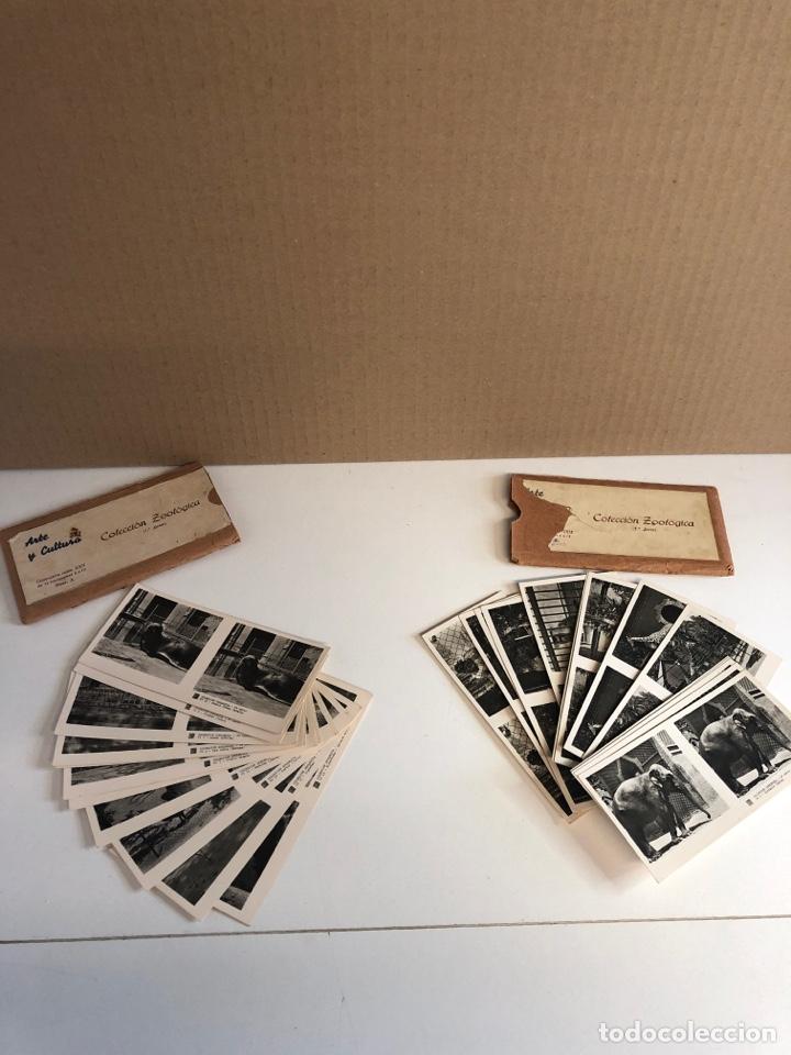 Fotografía antigua: Vistas estereoscópicas arte y cultura colección zoológica primera y segunda serie - Foto 2 - 226454544