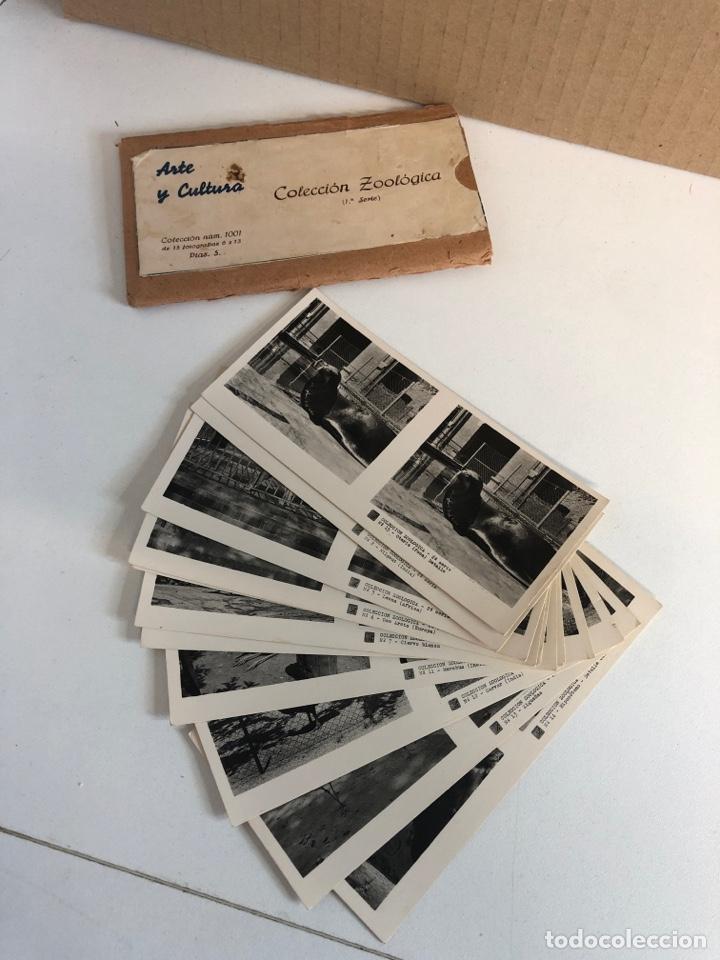 Fotografía antigua: Vistas estereoscópicas arte y cultura colección zoológica primera y segunda serie - Foto 3 - 226454544