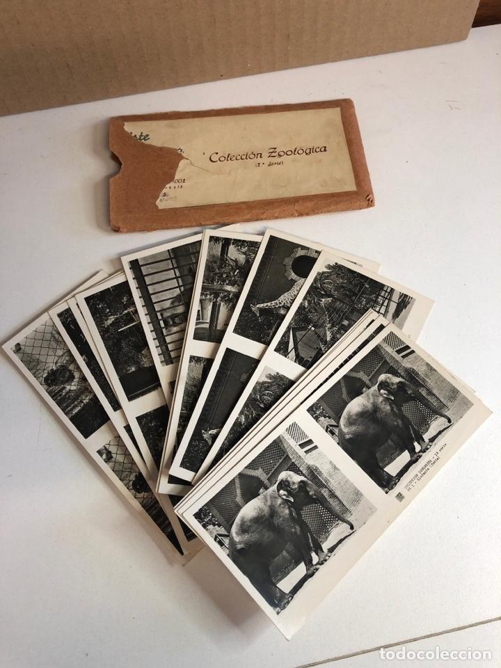 Fotografía antigua: Vistas estereoscópicas arte y cultura colección zoológica primera y segunda serie - Foto 4 - 226454544