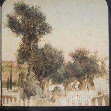 Fotografía antigua: 1 CARTON ESTEREO. JARDIN DE LOS OLIVOS, GETSEMANÍ . JERUSALEN . 8,5 X 17 CM.. Lote 236007385