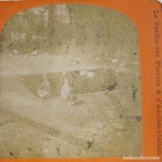 Fotografía antigua: 1 CARTON ESTEREO. LE JARDIN DES PLANTES & ACCLIMATATION DE PARIS. 8,5 X 17 CM.. Lote 236116175