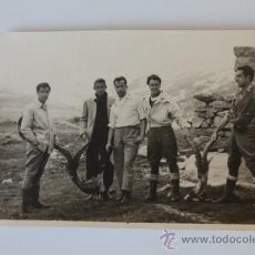 Alte Fotografie - Fotografía antigua de caza. Montería. - 39185275