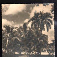 Fotografía antigua: CUBA. FOTOGRAFIA DE PAISAJE CUBANO. 25 X 20CM.. Lote 39254746