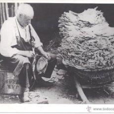 Fotografía antigua: FOTOGRAFÍA DE PREPARACIÓN DE HOJAS DE TABACO PARA SU SECADO. ESPAÑA. FOTO CIFRA. AÑOS 40. Lote 39500518