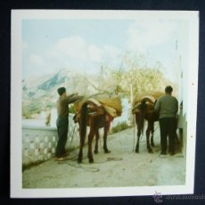 Fotografía antigua: 1968- MULAS. ALGECIRAS. CÁDIZ. FOTOGRAFIA ORIGINAL. Lote 41531832