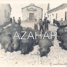 Fotografía antigua: ARACENA, HUELVA, CERDOS POR LA CALLE, AL FONDO ERMITA SAN ROQUE, IMPRESIONANTE, LEER. Lote 43590275