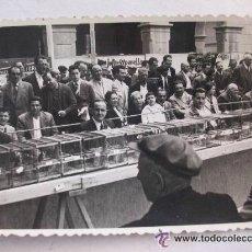 Fotografía antigua: FOTO DE UN CONCURSO O EXPOSICION DE JILGUEROS , 1958 .. 7 X 10 CM. Lote 222495868